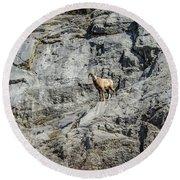 Big Horn Sheep Coming Down The Mountain  Round Beach Towel