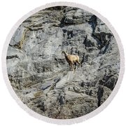 Big Horn Sheep Coming Down The Mountain  Round Beach Towel