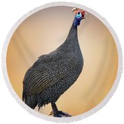 Helmeted Guinea-fowl Perched On A Rock Round Beach Towel