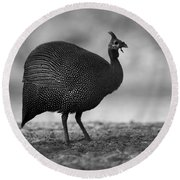 Helmeted Guineafowl Round Beach Towel