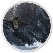 Henodus Turtle At The Waters Edge Round Beach Towel