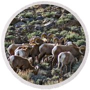 Herd Of Horns Round Beach Towel