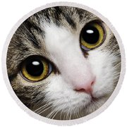 Here Kitty Kitty Close Up Round Beach Towel