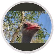 Ostrich Here's Looking At You Round Beach Towel by Belinda Lee
