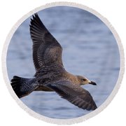 Round Beach Towel featuring the photograph Herring Gull In Flight Photo by Meg Rousher