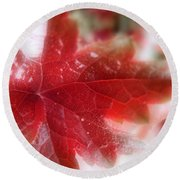 Back Lit Beauty Red Leaf Round Beach Towel
