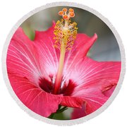 Round Beach Towel featuring the photograph Hibiscus by Todd Blanchard