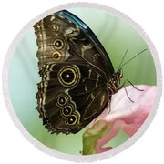 Round Beach Towel featuring the photograph Hidden Beauty Of The Butterfly by Debbie Green