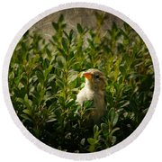 Round Beach Towel featuring the photograph Hide And Seek by Mariola Bitner