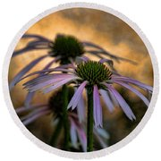 Hiding In The Shadows Round Beach Towel by Peggy Hughes