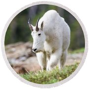 Round Beach Towel featuring the photograph High Country Mountain Goat by Jack Bell