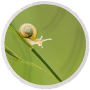 High Speed Snail Round Beach Towel by Mircea Costina Photography