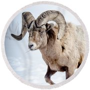 Big Horns On This Big Horn Sheep Round Beach Towel
