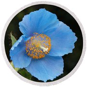 Himalayan Gift -- Meconopsis Poppy Round Beach Towel
