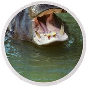 Hippopotamus Hippopotamus Amphibius Round Beach Towel