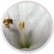 Honey Bee Up Close And Personal Round Beach Towel