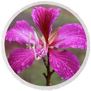 Hong Kong Orchid Tree Flower Round Beach Towel by Venetia Featherstone-Witty
