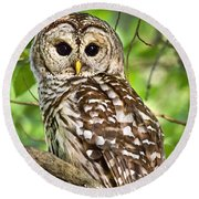 Round Beach Towel featuring the photograph Hoot Owl by Christina Rollo