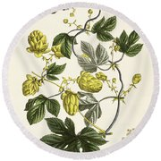 Hop Vine From The Young Landsman Round Beach Towel by Matthias Trentsensky