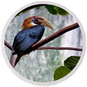 Round Beach Towel featuring the photograph Hornbill In Paradise by Adam Olsen