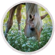 Horse And Daisies Round Beach Towel by Paul Freidlund
