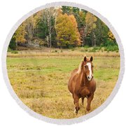 Horse In Field-fall Round Beach Towel