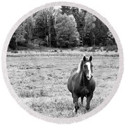 Horse In Field In Black And White Round Beach Towel