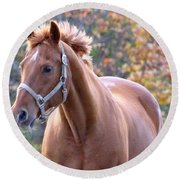 Round Beach Towel featuring the photograph Horse Muscle by Glenn Gordon