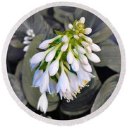 Hosta Ready To Bloom Round Beach Towel