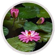 Hot Pink And Green Tropical Waterlilies Round Beach Towel