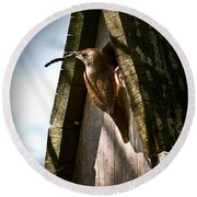 House Wren At Nest Box Round Beach Towel