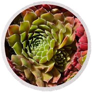 Houseleek Group Round Beach Towel