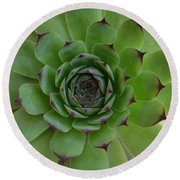 Houseleek Sempervivum Round Beach Towel