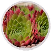 Houseleeks Aka Sempervivum From The Side Round Beach Towel
