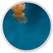 Hovering Spotted Jelly 2 Round Beach Towel