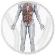 Human Organs Male Round Beach Towel