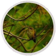 Humming Birds Perched  Round Beach Towel