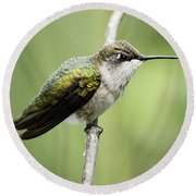 Hummingbird 3 Round Beach Towel by Bonfire Photography