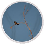 Hummingbird Round Beach Towel by David S Reynolds
