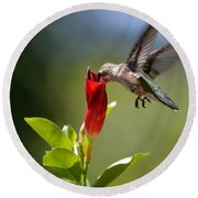 Hummingbird Dipping Round Beach Towel by Debbie Green