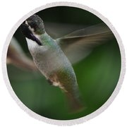 Round Beach Towel featuring the photograph Hummingbird Male Anna In Flight Over Perch by Jay Milo