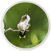 Round Beach Towel featuring the photograph Hummingbird Flexibility by Christina Rollo