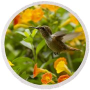 Hummingbird Looking For Food Round Beach Towel by Heiko Koehrer-Wagner