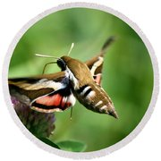 Hummingbird Moth From Behind Round Beach Towel