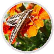 Hummingbird Moth On A Marigold Flower Round Beach Towel by Nadja Rider