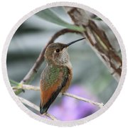 Hummingbird On A Branch Round Beach Towel