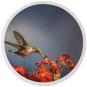 Hummingbird Or My Summer Visitor Round Beach Towel