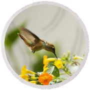 Hungry Flowerbird Round Beach Towel