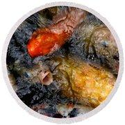 Hungry Koi Fish Round Beach Towel