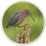 Hunting Green Heron Round Beach Towel by John Vose